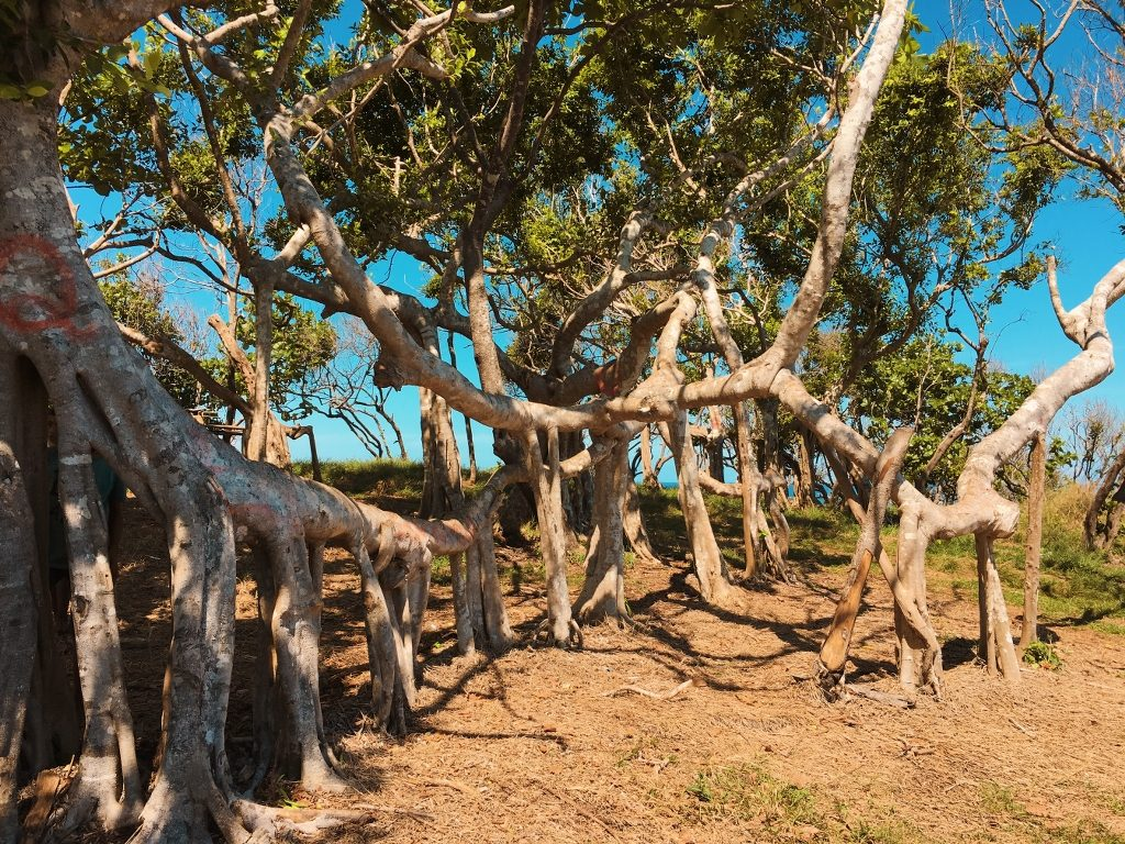 Pohon Akar Sumba
